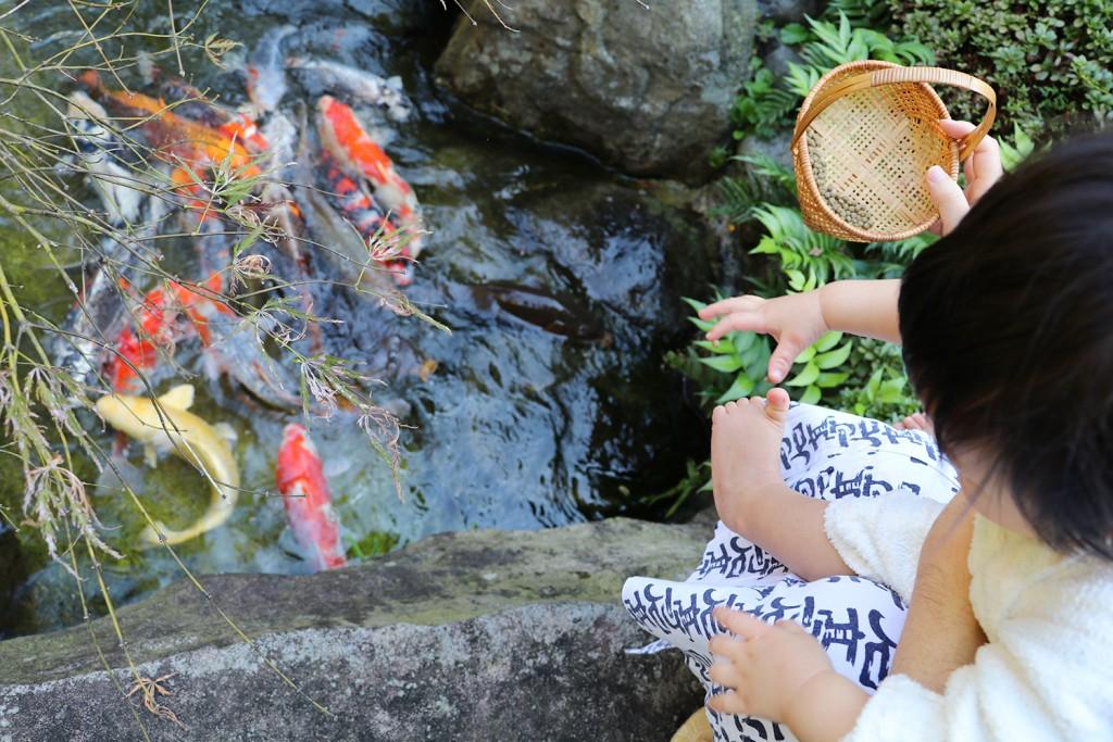 子連れ旅行-桜岡茶寮の鯉